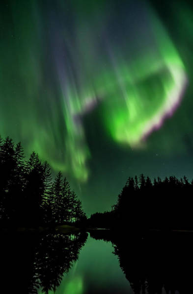 Wall Art - Photograph - Northern Lights, Tongass National by John Hyde