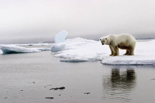 Hunting Island Wall Art - Photograph - Norway, Svalbard Archipelago by Cordier Sylvain / Hemis.fr