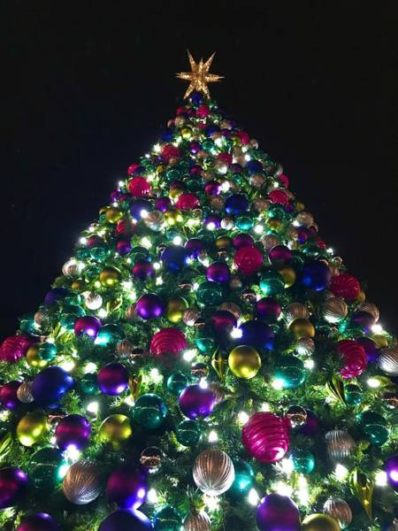 Photograph - O Christmas Tree by Chris Montcalmo
