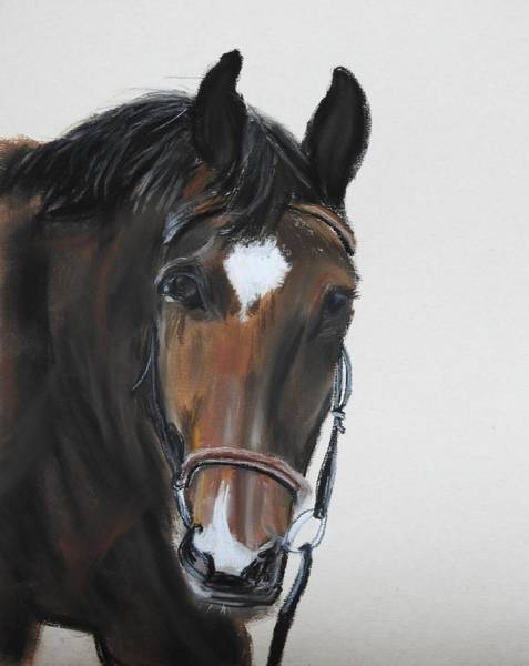Wall Art - Pastel - Oliver by Betty-Anne McDonald