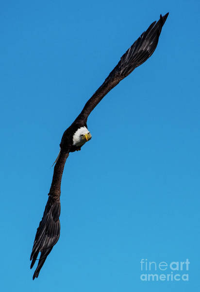 Wingspan Photograph - On Edge by Mike Dawson
