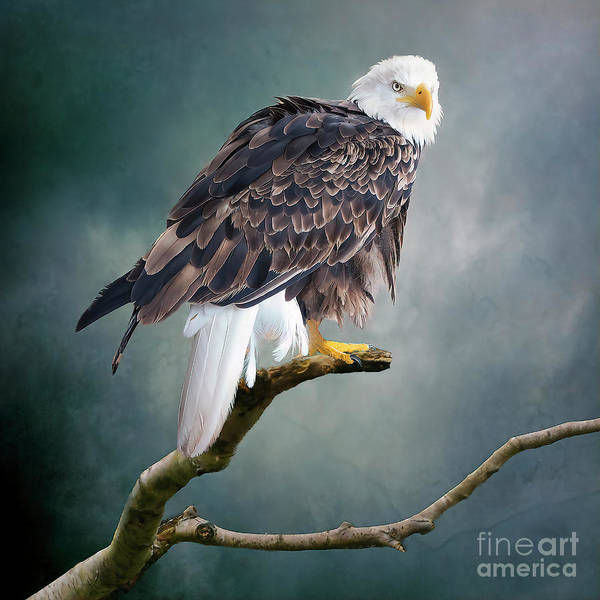Photograph - On The Lookout by Brian Tarr