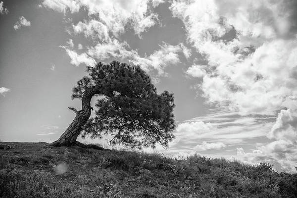 Photograph - One Tree Hill by Kristopher Schoenleber