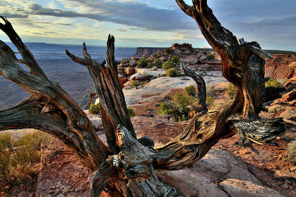Photograph - Orange Cliffs Overlook In Canyonlands by Ray Mathis
