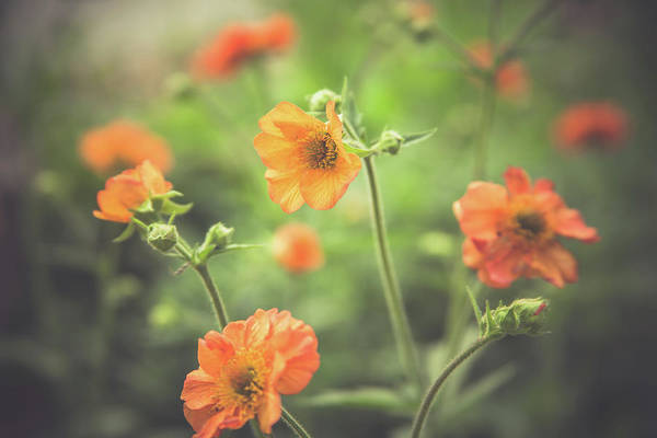 Photograph - Orange Garden Flowers by Jeanette Fellows