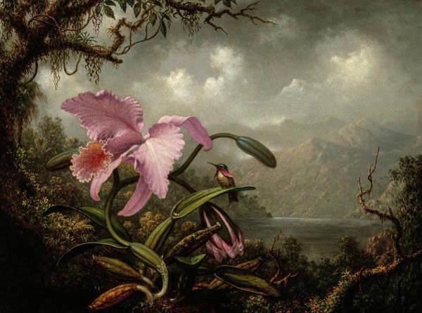 Wall Art - Painting - Orchid And Hummingbird, Circa 1885 by Martin Johnson Heade