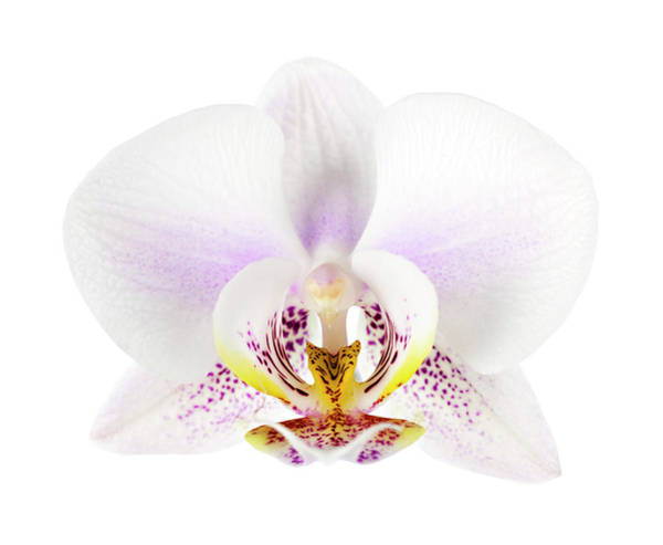 Cymbidium Photograph - Orchid by Mariusfm77