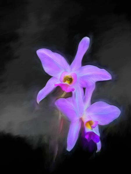 Wall Art - Photograph - Orchid On Black by Ches Black