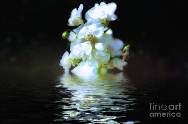 Wall Art - Photograph - Orchid Reflection by Elaine Manley