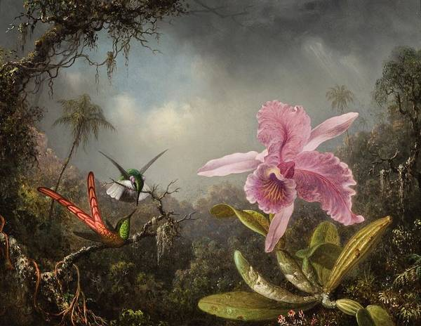 Wall Art - Painting - Orchid With Two Hummingbirds  by MotionAge Designs