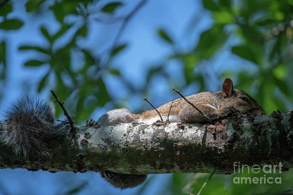 Photograph - Out On A Limb by Dale Powell