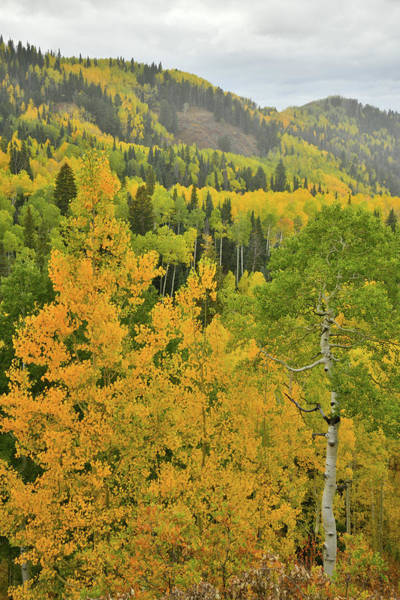 Photograph - Owl Creek Pass Road Fall Colors by Ray Mathis