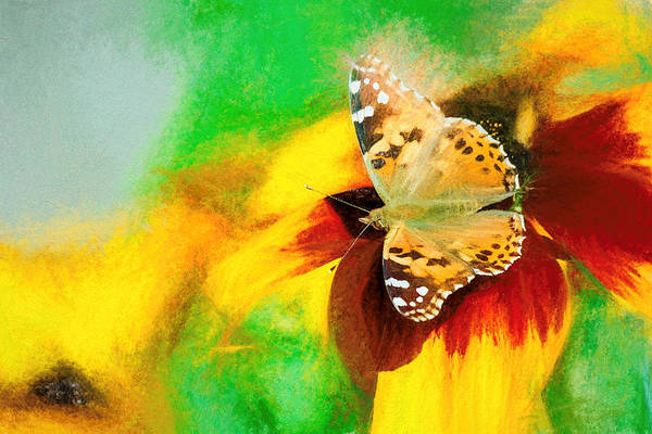 Photograph - Painted Lady Butterfly Bright Smudge by Don Northup