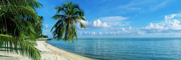 Wall Art - Photograph - Palm Trees On The Beach, Matira Beach by Panoramic Images