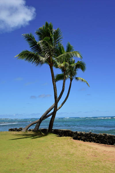 Photograph - Palm Trees On The Coast Of Hauula by Ryan Rossotto