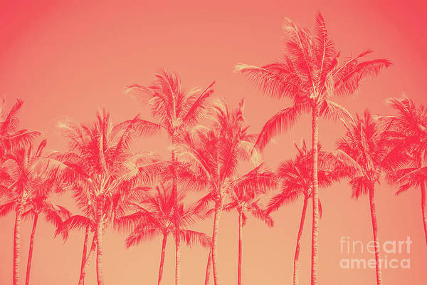 Photograph - Palms In Living Harmony by Sharon Mau