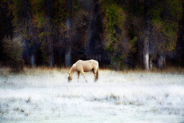 Photograph - Palomino In Frosted Autumn Field by David Chasey