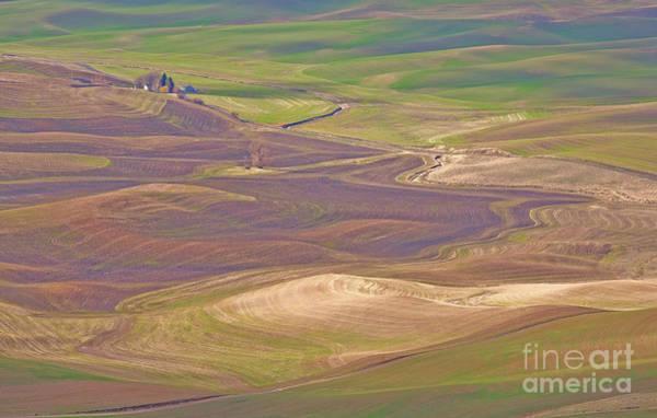 Photograph - Palouse Hills by Darrel Giesbrecht
