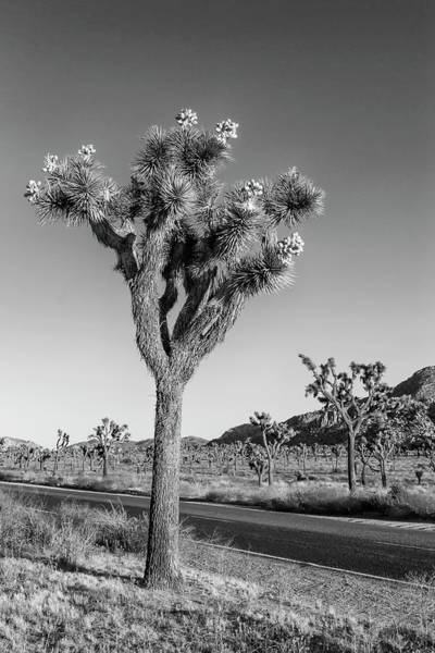 Wall Art - Photograph - Park Boulevard, Joshua Tree National Park by Melanie Viola