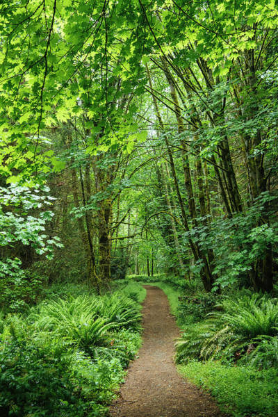 Wall Art - Photograph - Path In A Forest, Bainbridge Island by Panoramic Images