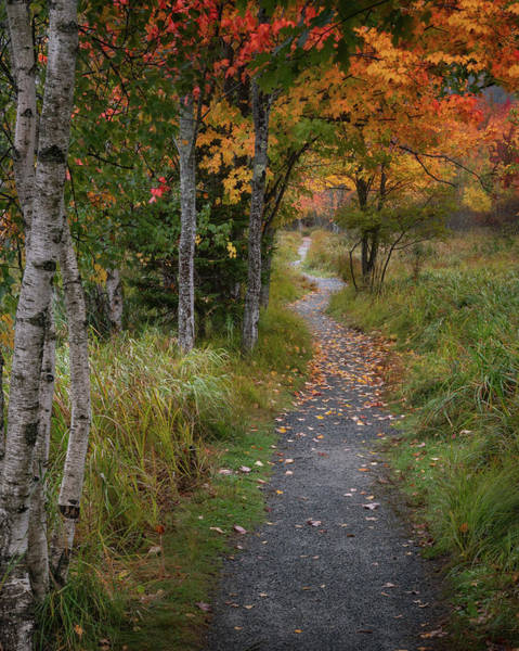 Photograph - Pathway Through Autumn's Colors by Darylann Leonard Photography