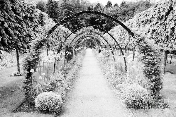 Wall Art - Photograph - pathway through Bangor Castle walled garden by Joe Fox