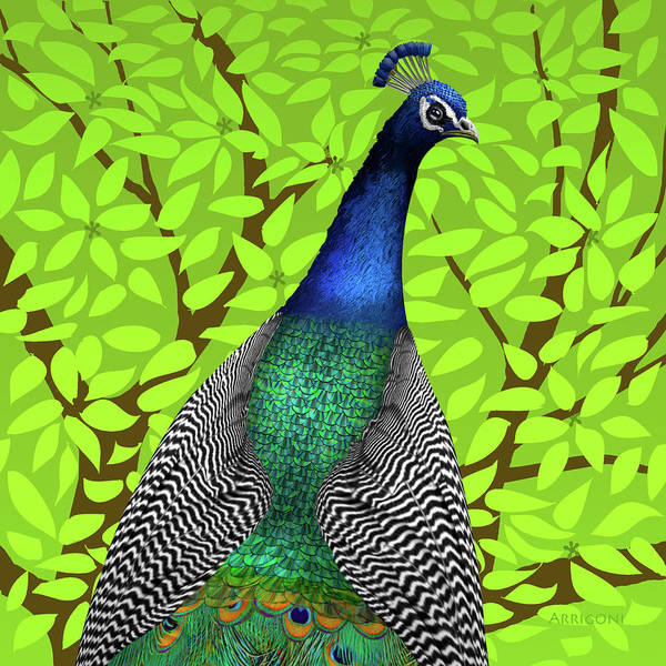 Painting - Peacock In Tree, Lime Green, Square by David Arrigoni
