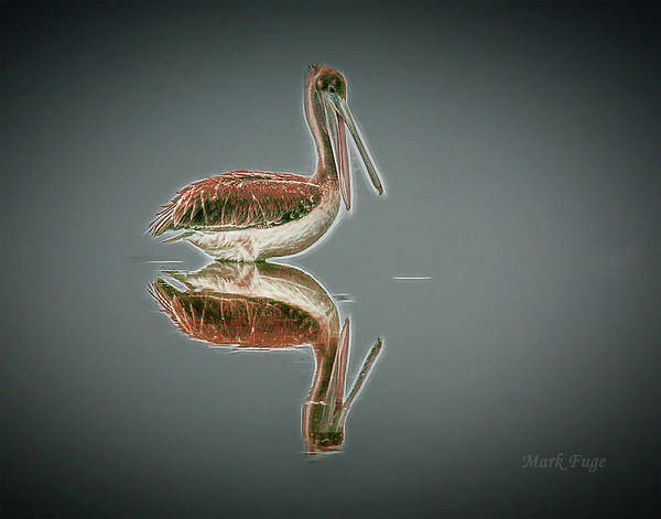 Pelican Island National Wildlife Refuge Wall Art - Photograph - Pelican Reflection by Mark Fuge