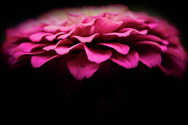 Wall Art - Photograph - Petal Pusher by Matthew Blum