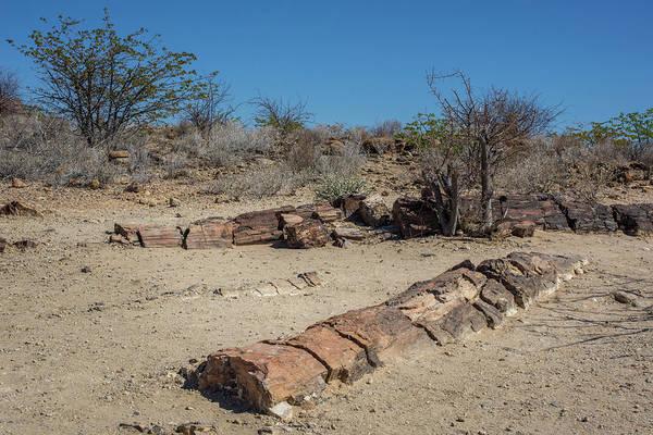 Wall Art - Photograph - Petrified Tree Trunks Petrified Forest National Monument Kunene Region Namibia by imageBROKER - Matthias Graben