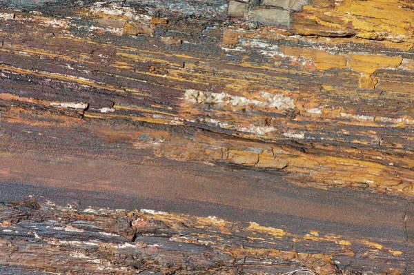 Wall Art - Photograph - Petrified Wood, Utah by William Mullins