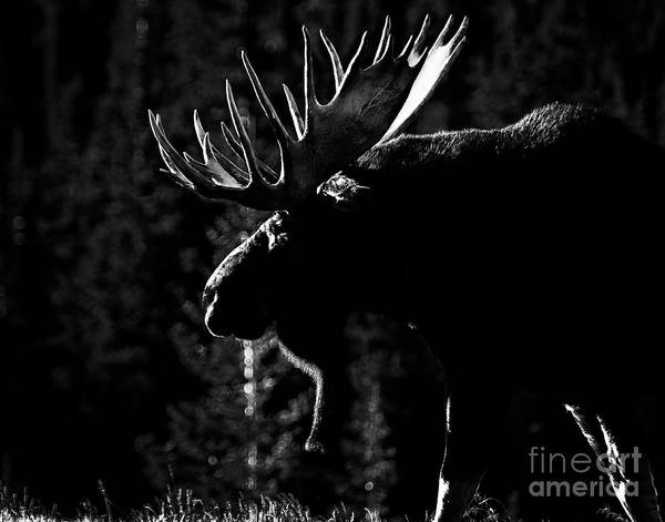 Photograph - Phantom Of The Forest by Jim Garrison