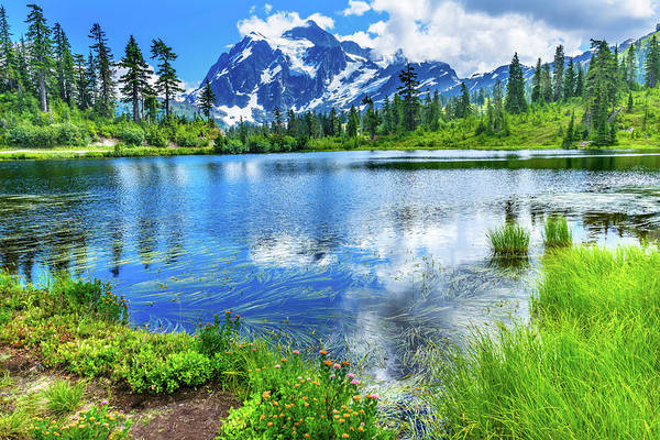 Wall Art - Photograph - Picture Lake Evergreens Mount Shuksan by William Perry