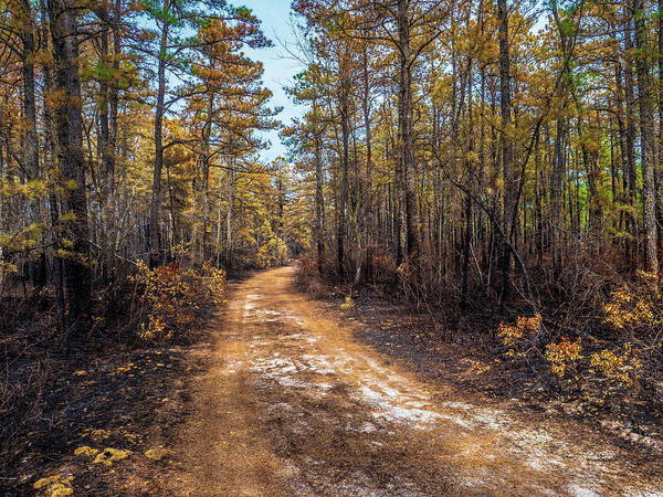 Photograph - Pine Barrens Burn by Louis Dallara