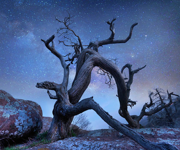 Photograph - Pine Tree At Night, Mount Scott by