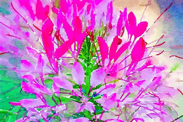 Mixed Media - Pink Queen Watercolor by Susan Rydberg