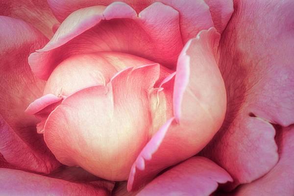 Wall Art - Photograph - Pink Rose Petals by Susan Candelario