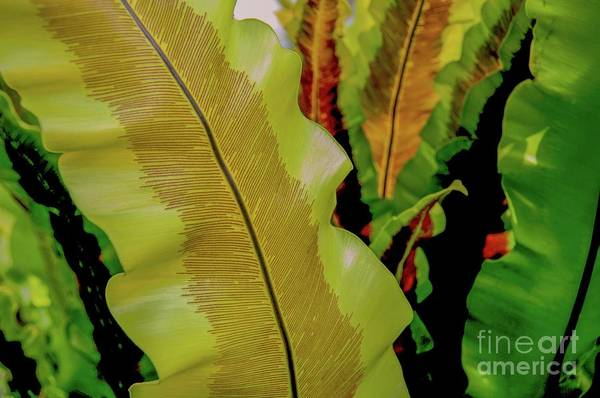 Photograph - Plants And Leaves Hawaii by D Davila
