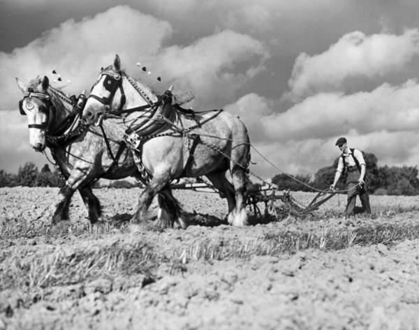 Plow Horses Photograph - Ploughing Competition by Harry Todd