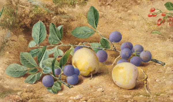 Wall Art - Drawing - Plums by John William Hill