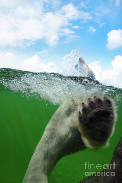 Photograph - Polar Bear by Angela Doelling AD DESIGN Photo and PhotoArt