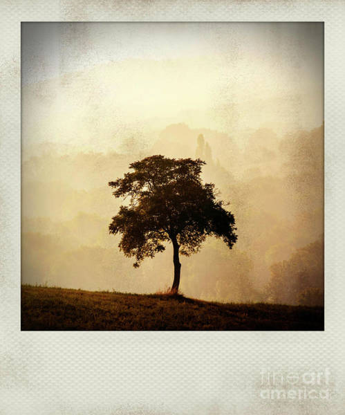 Wall Art - Photograph - Polaroid Effect Of Trees In Countryside by Bernard Jaubert