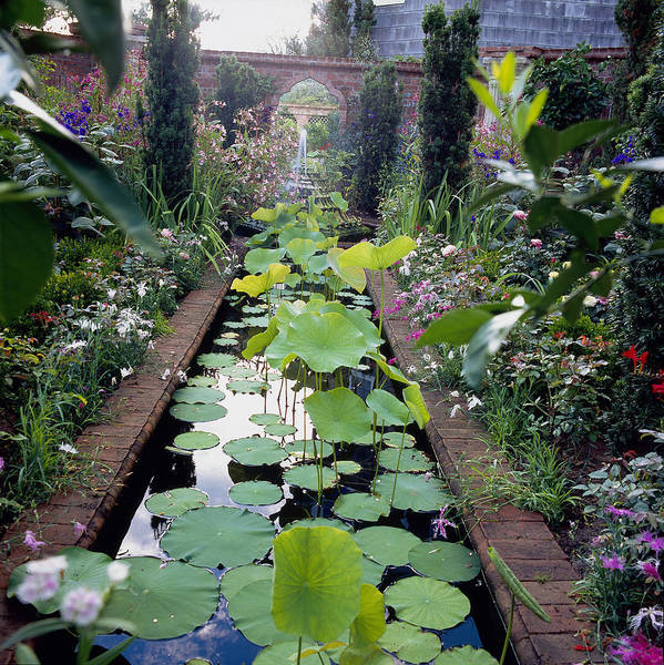 Fortified Wall Art - Photograph - Pond With Lotus Nelumbo Nucifera, East by Richard Felber