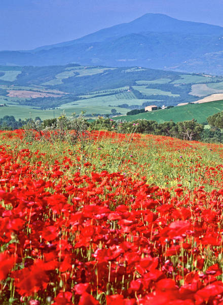 Tuscany Photograph - Poppies And Cyprus, Val Dorcia by Kathy Collins