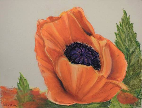 Wall Art - Photograph - Poppy by Betty-Anne McDonald