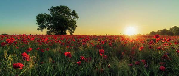 Photograph - Poppy Field Sunrise 5 by James Billings