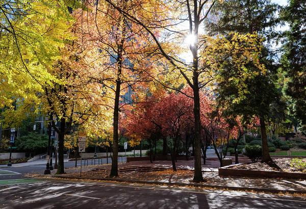 Photograph - Portland Fall by Steven Clark