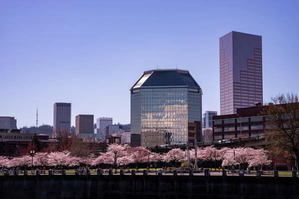 Photograph - Portland Spring by Steven Clark