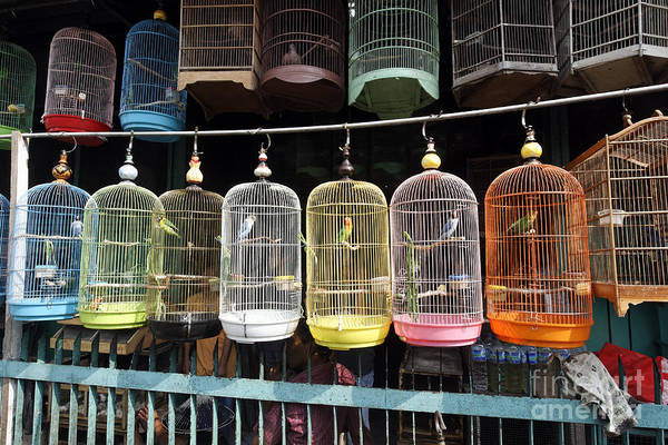 Shop Wall Art - Photograph - Pramuka Bird Market, Jakarta by Erni