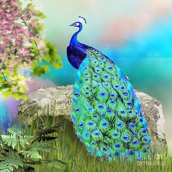 Mixed Media - Proud Peacock by Morag Bates
